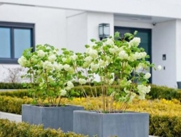 Plantenbakken Pottery Pots Tuinaccessoires Hoveniersbedrijf Jutten
