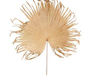 Gedroogde palmwaaier groot