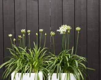 Plantenbak 'Buxus' vierkant diverse formaten