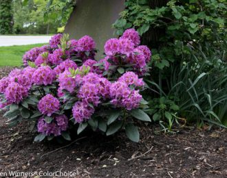 Rhododendron alle soorten